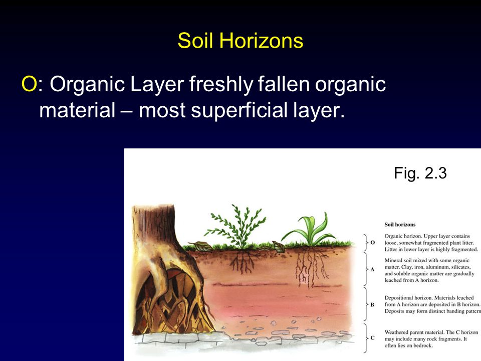 Molles: Ecology 2 nd Ed. Soil Horizons O: Organic Layer freshly fallen organic material – most superficial layer. Fig. 2.3