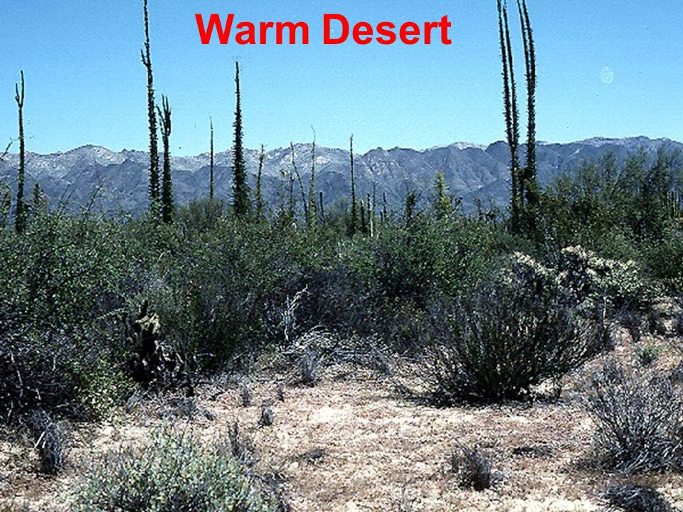 Molles: Ecology 2 nd Ed. Warm Desert