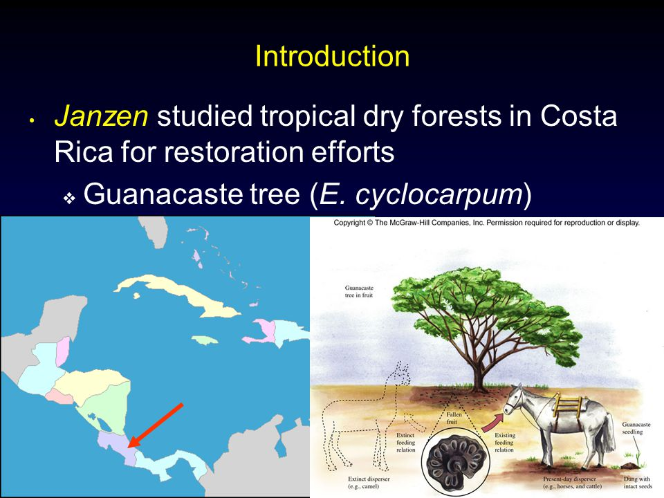 Molles: Ecology 2 nd Ed. Introduction Janzen studied tropical dry forests in Costa Rica for restoration efforts  Guanacaste tree (E. cyclocarpum)