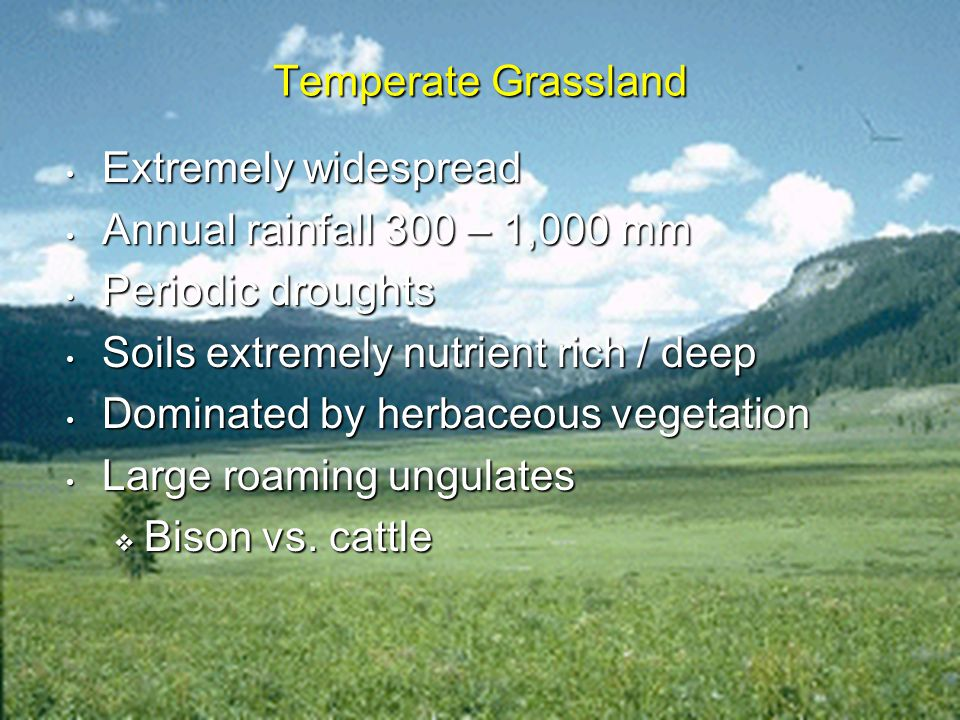 Molles: Ecology 2 nd Ed. Temperate Grassland Extremely widespread Extremely widespread Annual rainfall 300 – 1,000 mm Annual rainfall 300 – 1,000 mm P