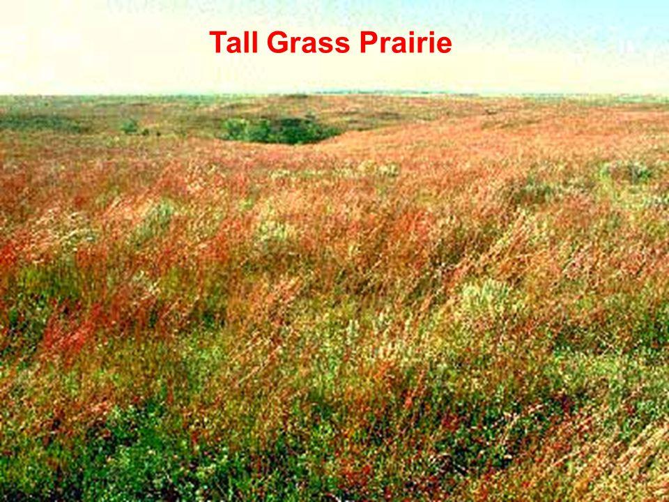 Molles: Ecology 2 nd Ed. Tall Grass Prairie