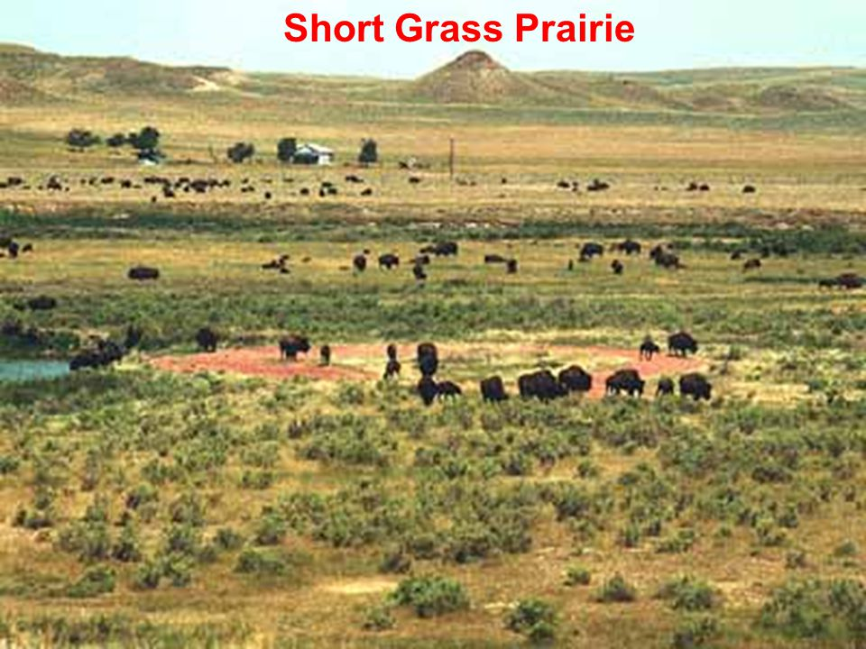 Molles: Ecology 2 nd Ed. Short Grass Prairie