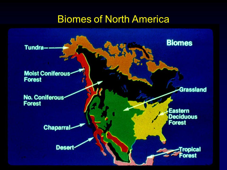Molles: Ecology 2 nd Ed. Biomes of North America
