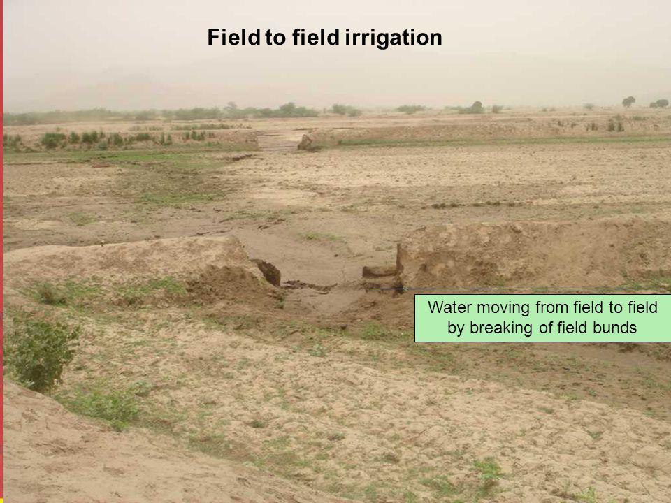 Field to field irrigation Water moving from field to field by breaking of field bunds