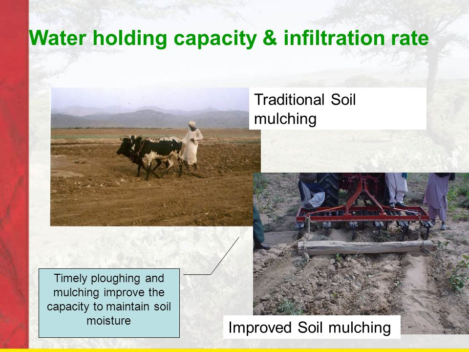 Water holding capacity & infiltration rate Traditional Soil mulching Improved Soil mulching Timely ploughing and mulching improve the capacity to maintain soil moisture