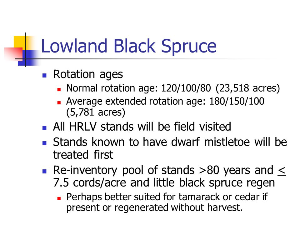 Lowland Black Spruce Rotation ages Normal rotation age: 120/100/80 (23,518 acres) Average extended rotation age: 180/150/100 (5,781 acres) All HRLV stands will be field visited Stands known to have dwarf mistletoe will be treated first Re-inventory pool of stands >80 years and < 7.5 cords/acre and little black spruce regen Perhaps better suited for tamarack or cedar if present or regenerated without harvest.