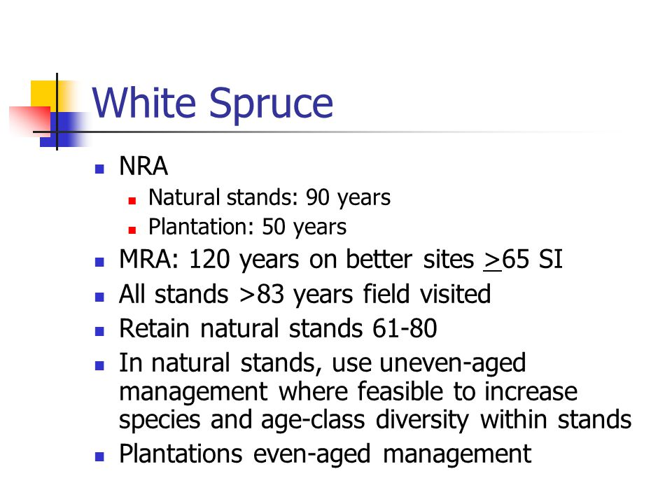 White Spruce NRA Natural stands: 90 years Plantation: 50 years MRA: 120 years on better sites >65 SI All stands >83 years field visited Retain natural stands 61-80 In natural stands, use uneven-aged management where feasible to increase species and age-class diversity within stands Plantations even-aged management