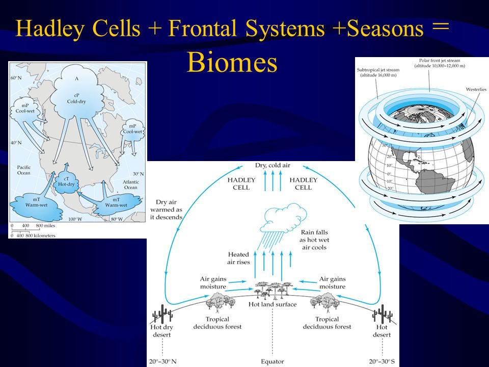 Hadley Cells + Frontal Systems +Seasons = Biomes