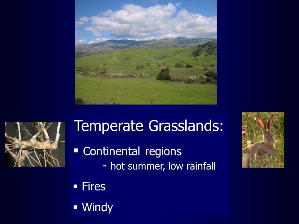 Temperate Grasslands:  Continental regions - hot summer, low rainfall  Fires  Windy