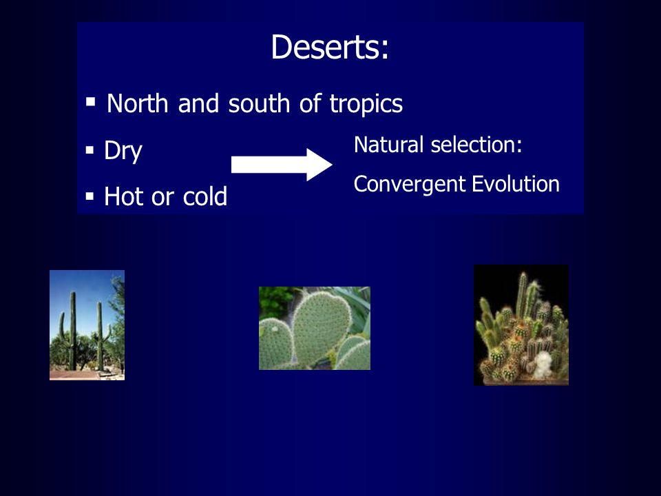 Deserts:  North and south of tropics  Dry  Hot or cold Natural selection: Convergent Evolution