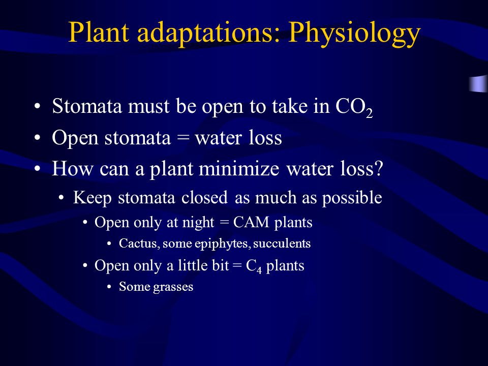 Plant adaptations: Physiology Stomata must be open to take in CO 2 Open stomata = water loss How can a plant minimize water loss.
