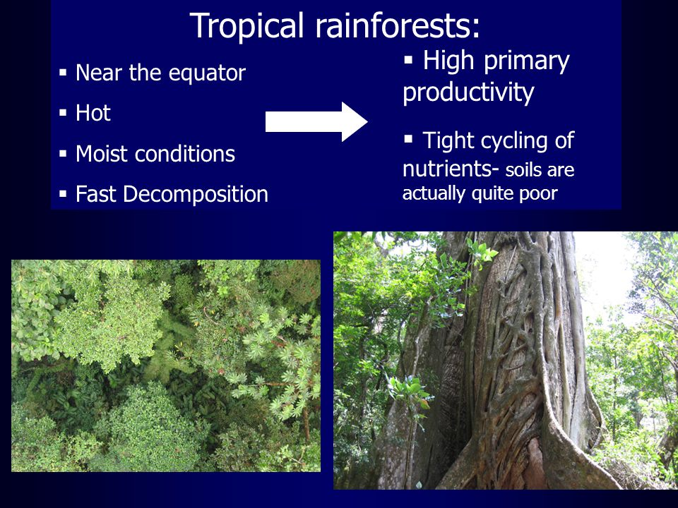 Tropical rainforests:  Near the equator  Hot  Moist conditions  Fast Decomposition  High primary productivity  Tight cycling of nutrients- soils are actually quite poor