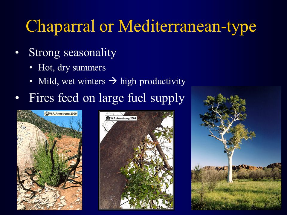 Chaparral or Mediterranean-type Strong seasonality Hot, dry summers Mild, wet winters  high productivity Fires feed on large fuel supply