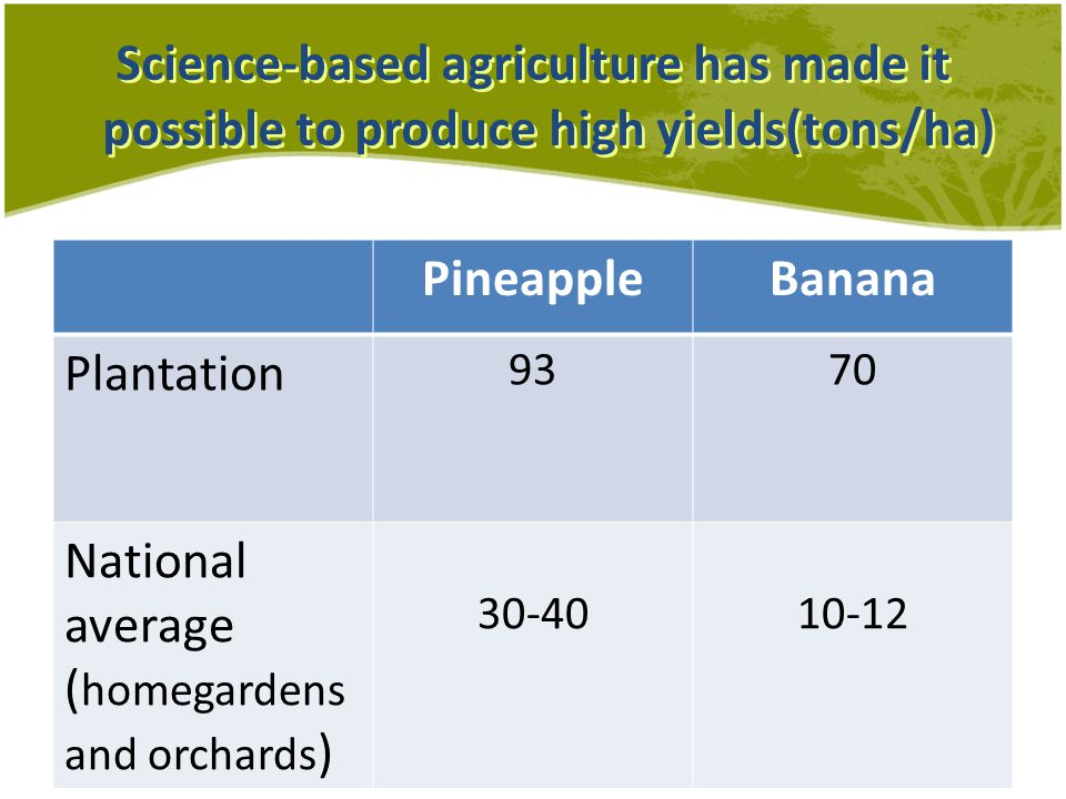 Science-based agriculture has made it possible to produce high yields(tons/ha) PineappleBanana Plantation 9370 National average ( homegardens and orchards ) 30-4010-12