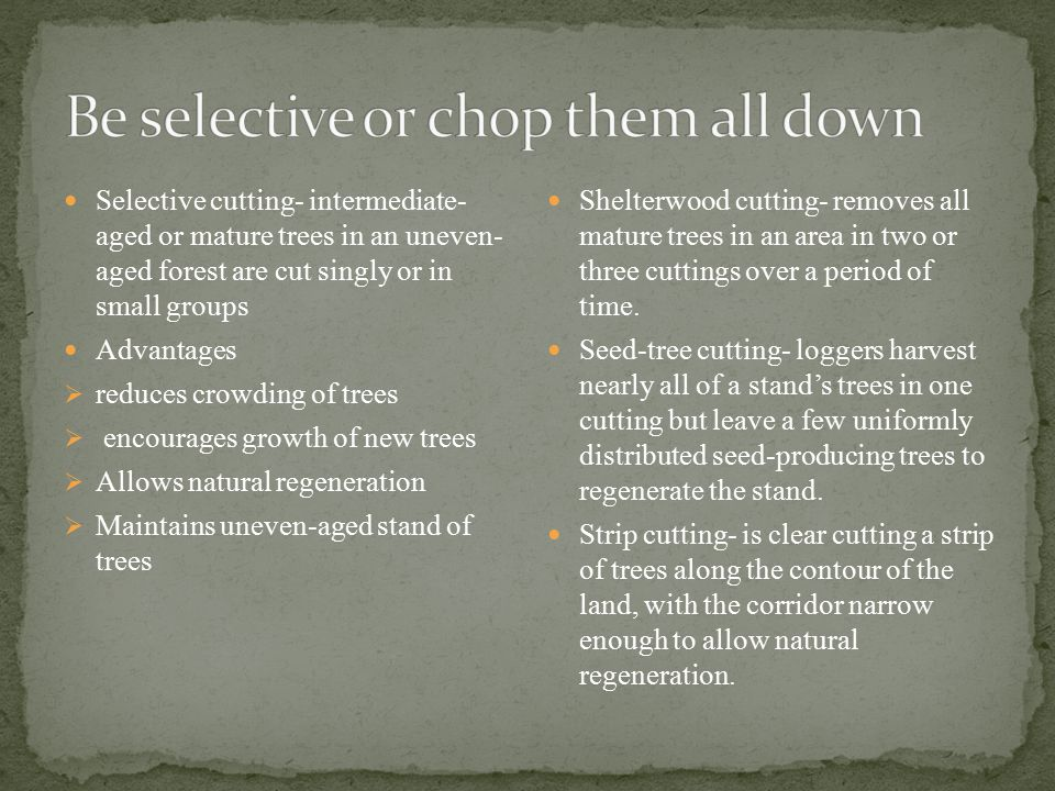 Selective cutting- intermediate- aged or mature trees in an uneven- aged forest are cut singly or in small groups Advantages  reduces crowding of tre