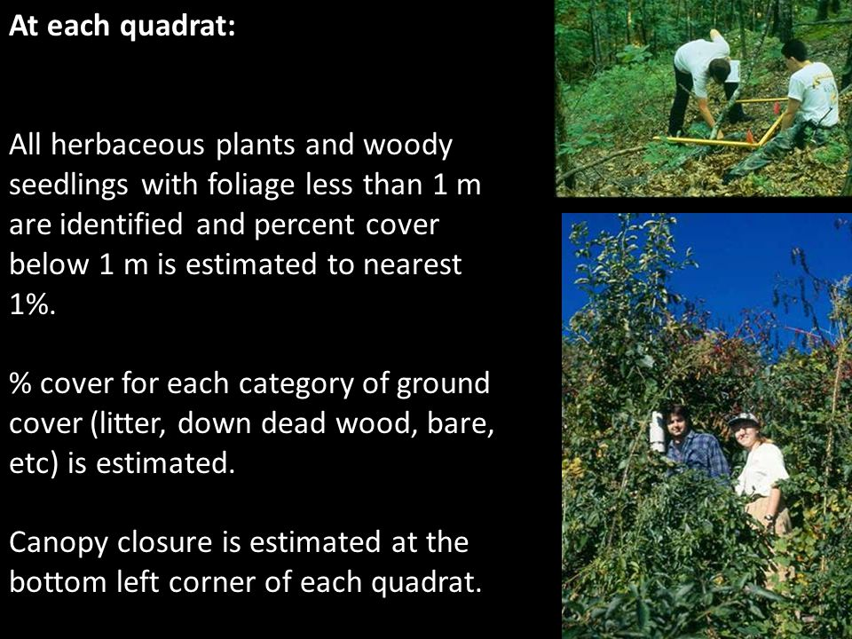 At each quadrat: All herbaceous plants and woody seedlings with foliage less than 1 m are identified and percent cover below 1 m is estimated to neare