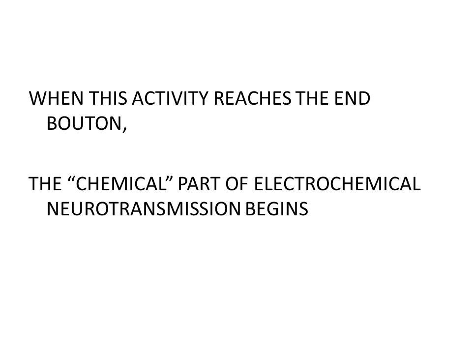 WHEN THIS ACTIVITY REACHES THE END BOUTON, THE CHEMICAL PART OF ELECTROCHEMICAL NEUROTRANSMISSION BEGINS