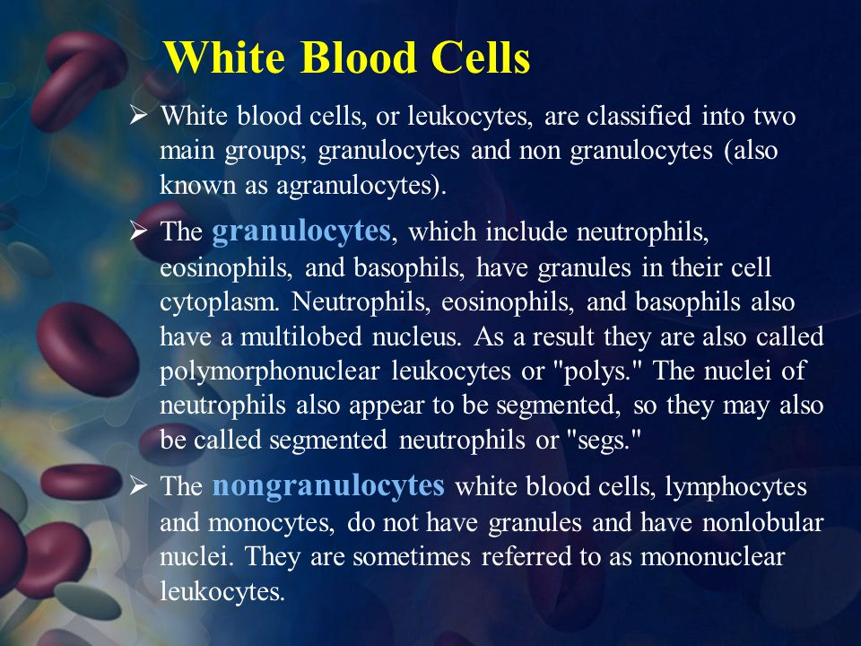 White Blood Cells  White blood cells, or leukocytes, are classified into two main groups; granulocytes and non granulocytes (also known as agranulocy