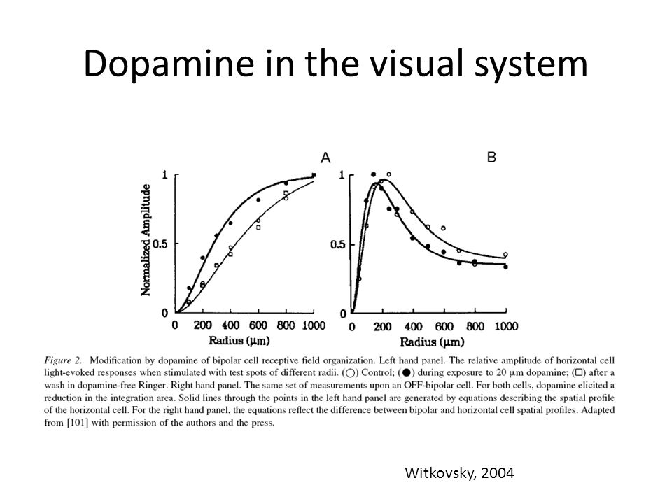 Dopamine in the visual system Witkovsky, 2004
