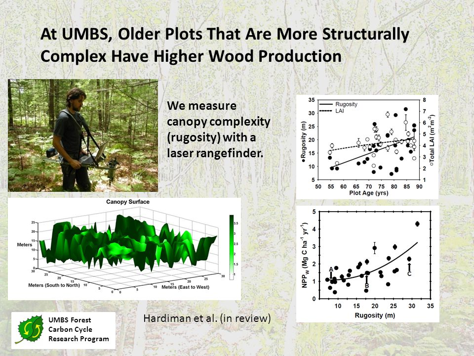 UMBS Forest Carbon Cycle Research Program At UMBS, Older Plots That Are More Structurally Complex Have Higher Wood Production Hardiman et al.