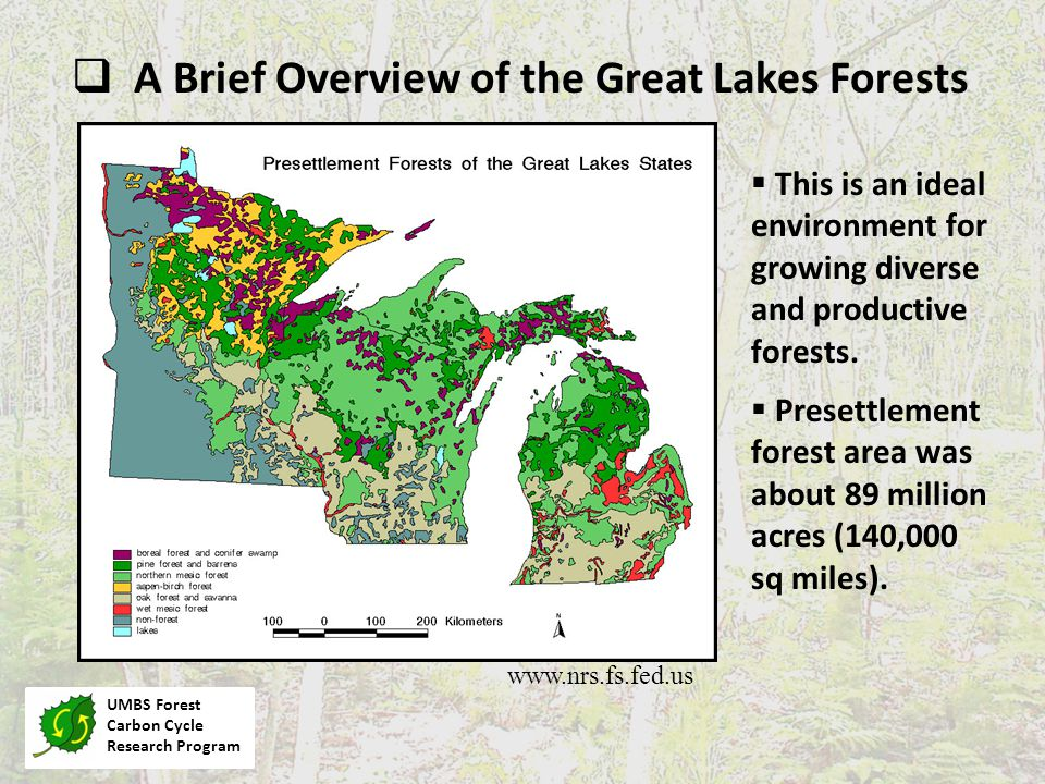 These Forests Were Virtually Entirely Cut Between ~1860 and 1920 Michigan Archives