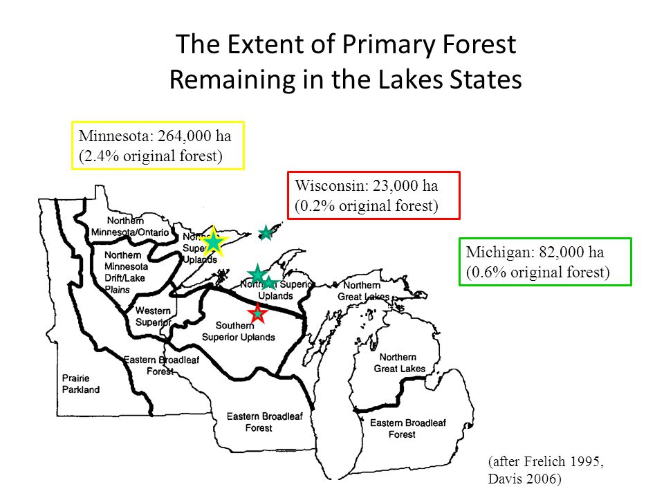Michigan: 82,000 ha (0.6% original forest) Wisconsin: 23,000 ha (0.2% original forest) Minnesota: 264,000 ha (2.4% original forest) The Extent of Primary Forest Remaining in the Lakes States (after Frelich 1995, Davis 2006)