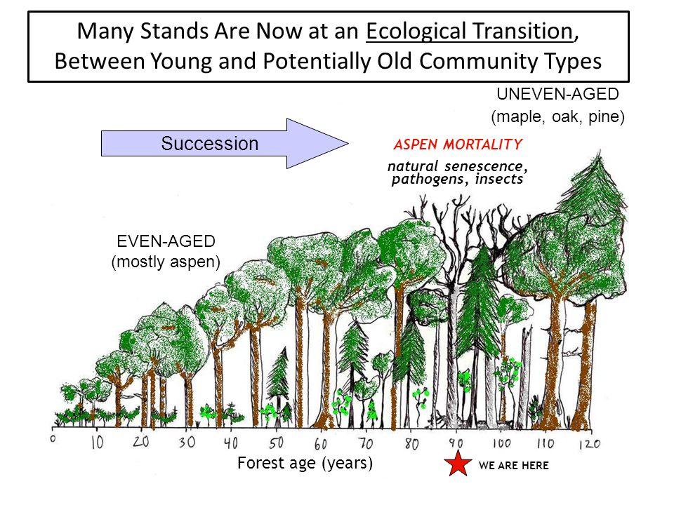 Northern Great Lakes: 643,000 ha (13% all timberland) Northern Superior Uplands: 104,000 ha (9% all timberland) Northern Minnesota: 369,000 ha (10% all timberland) Potentially Old Timberland (80-120 yrs) in the Lakes States Southern Superior Uplands: 830,000 ha (16% all timberland) Eastern Broadleaf Forest: 672,000 ha (19% all timberland) All timberland: 19,494,000 ha Potentially old: 2,747,000 ha (14%) Old: 464,000 ha (2%) (after Schmidt et al., 1996)