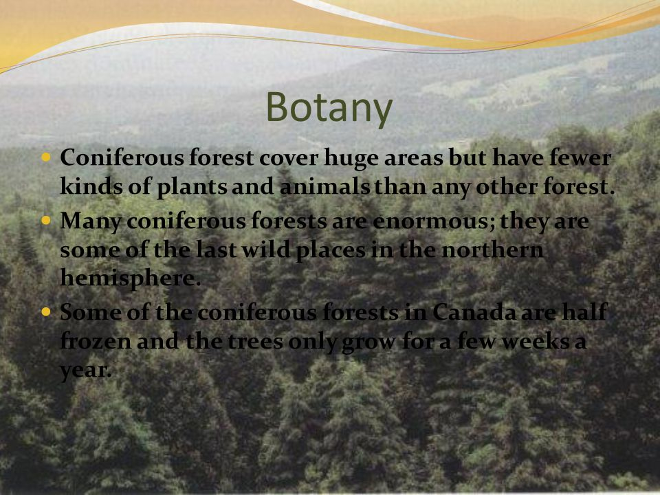 Botany Coniferous forest cover huge areas but have fewer kinds of plants and animals than any other forest.