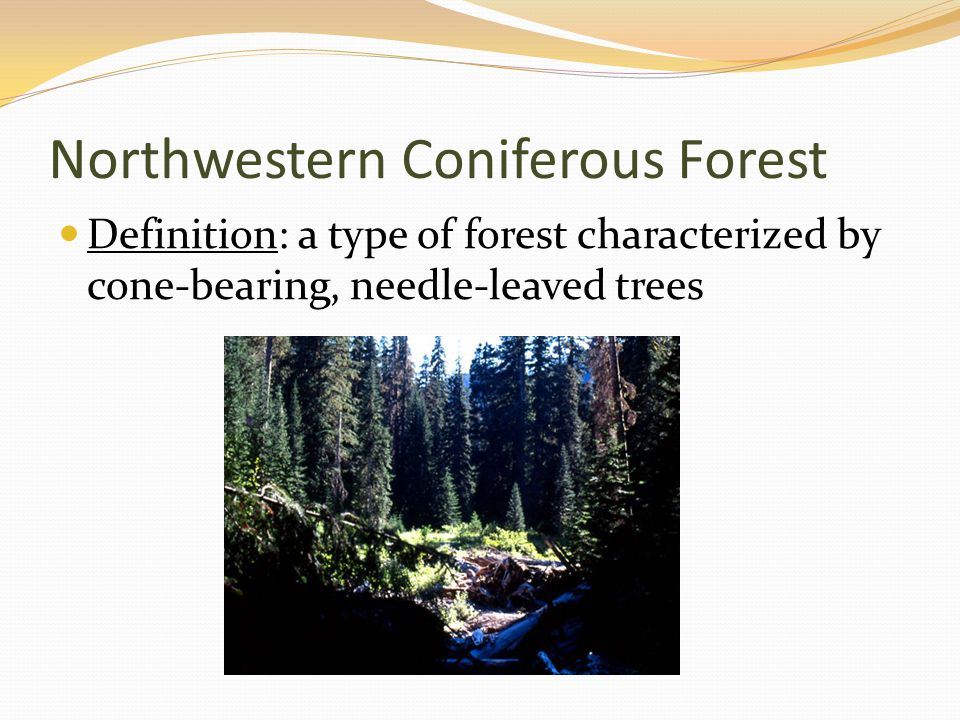 Definition: a type of forest characterized by cone-bearing, needle-leaved trees