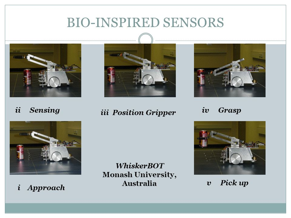 BIO-INSPIRED SENSORS WhiskerBOT Monash University, Australia ii Sensing iii Position Gripper v Pick up i Approach iv Grasp