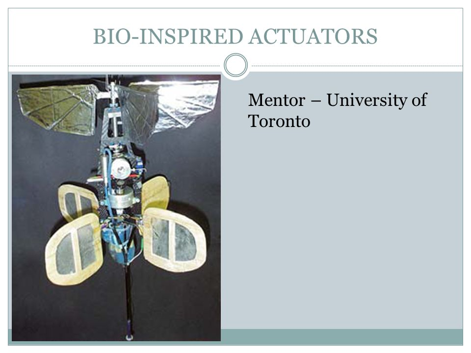 BIO-INSPIRED ACTUATORS Mentor – University of Toronto