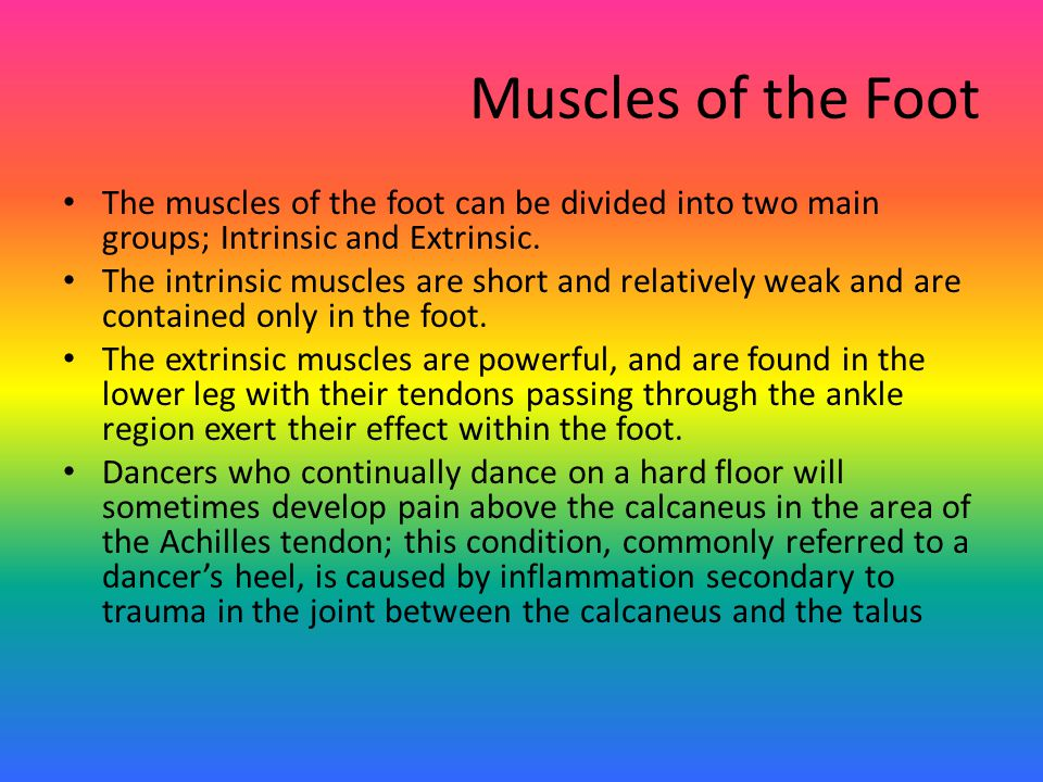 Muscles of the Foot The muscles of the foot can be divided into two main groups; Intrinsic and Extrinsic.