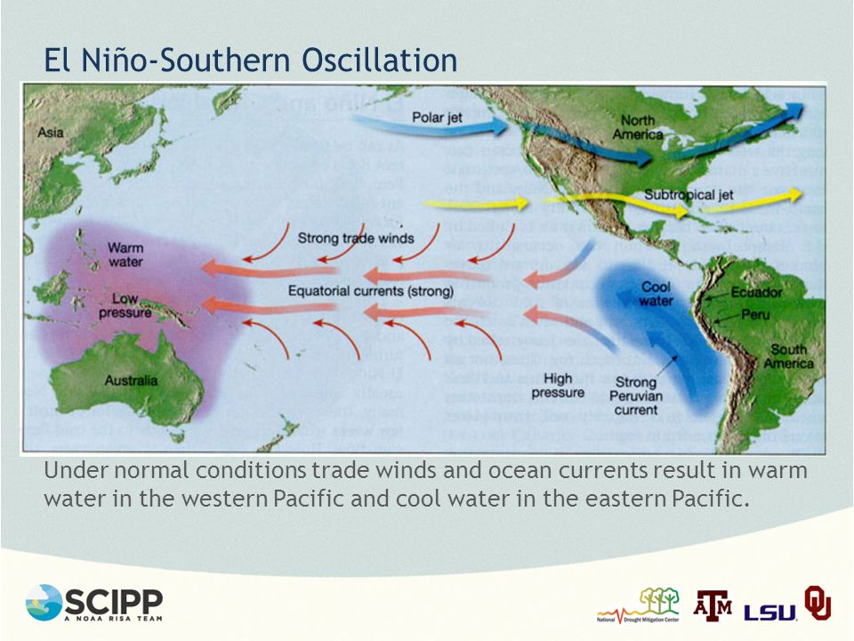 El Niño-Southern Oscillation Under normal conditions trade winds and ocean currents result in warm water in the western Pacific and cool water in the eastern Pacific.