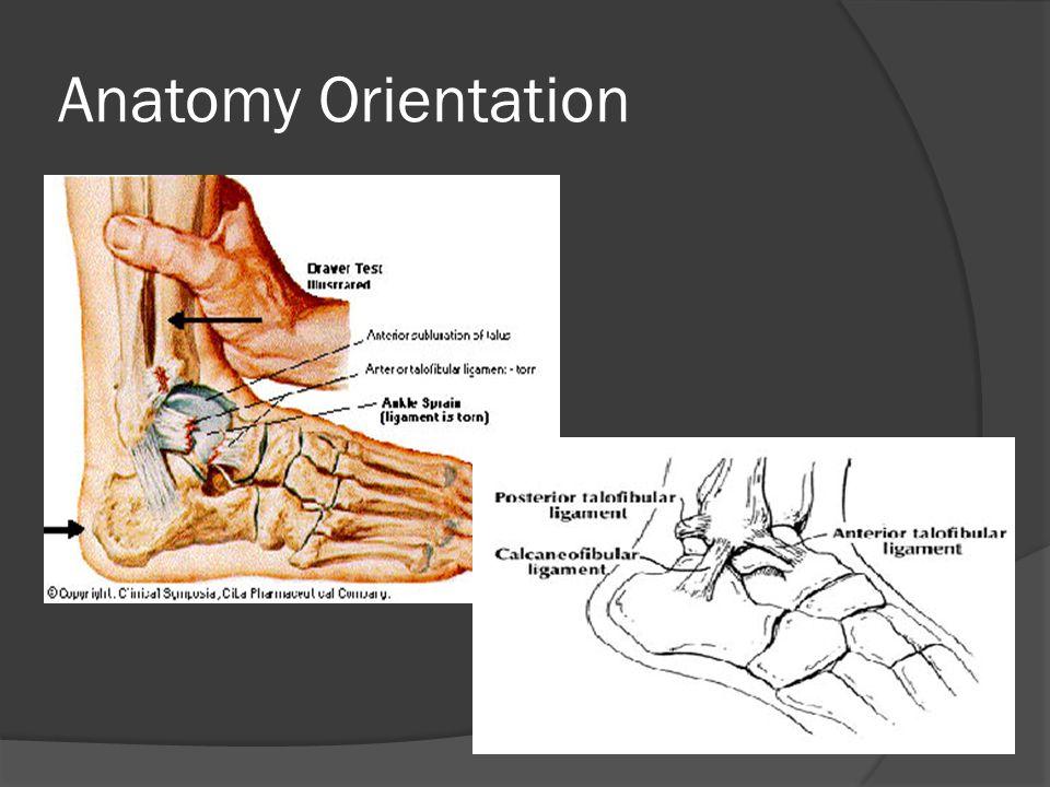 Anatomy Orientation