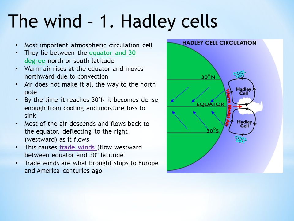 The wind – 1. Hadley cells Most important atmospheric circulation cell They lie between the equator and 30 degree north or south latitude Warm air ris