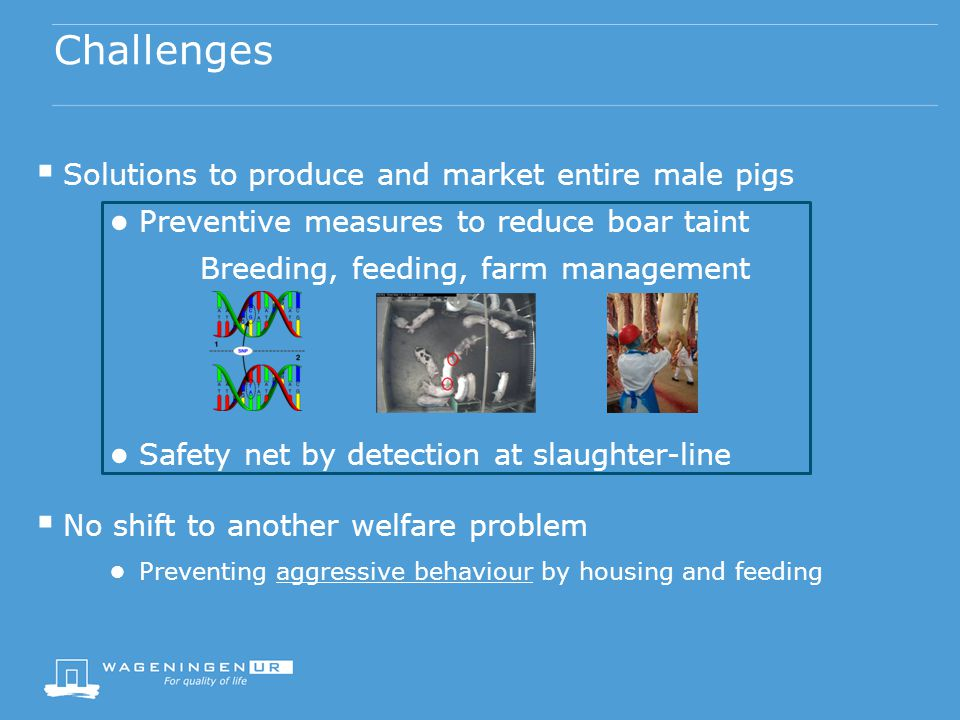 Challenges  Solutions to produce and market entire male pigs ● Preventive measures to reduce boar taint Breeding, feeding, farm management ● Safety net by detection at slaughter-line  No shift to another welfare problem ● Preventing aggressive behaviour by housing and feeding