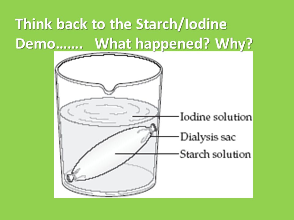 Think back to the Starch/Iodine Demo……. What happened Why