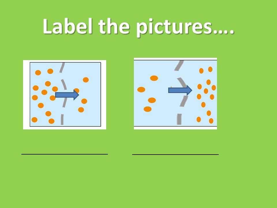 Label the pictures…. _________________________