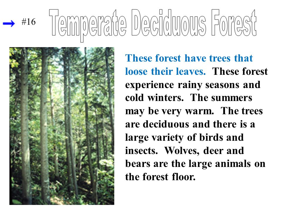 These forest have trees that loose their leaves. These forest experience rainy seasons and cold winters. The summers may be very warm. The trees are d