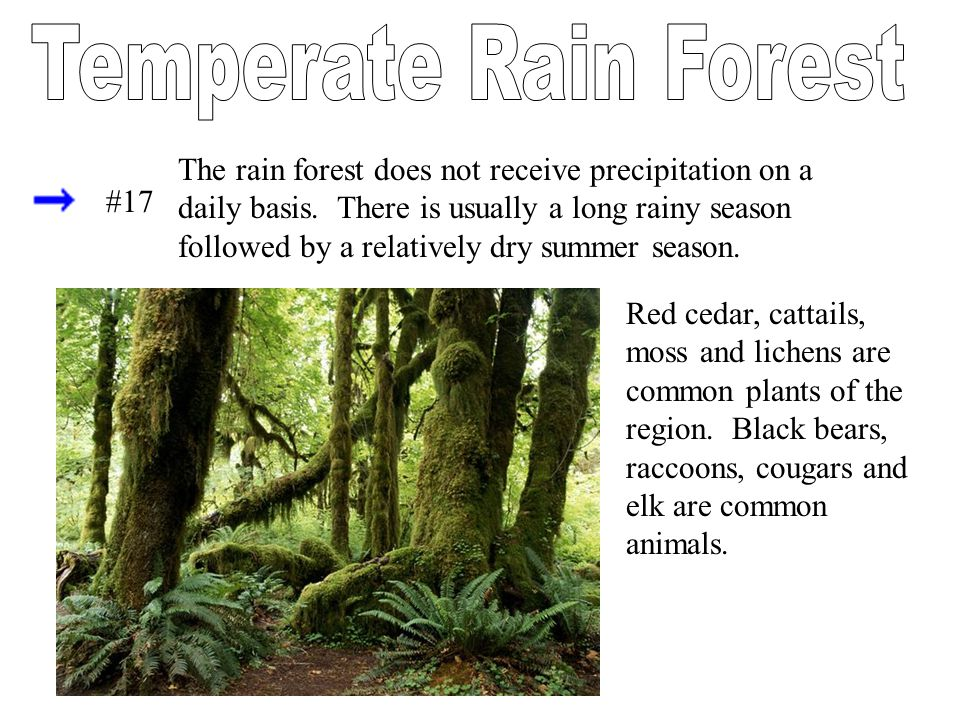 The rain forest does not receive precipitation on a daily basis. There is usually a long rainy season followed by a relatively dry summer season. Red