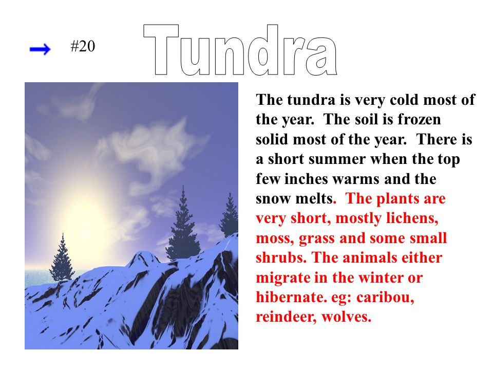 The tundra is very cold most of the year. The soil is frozen solid most of the year. There is a short summer when the top few inches warms and the sno