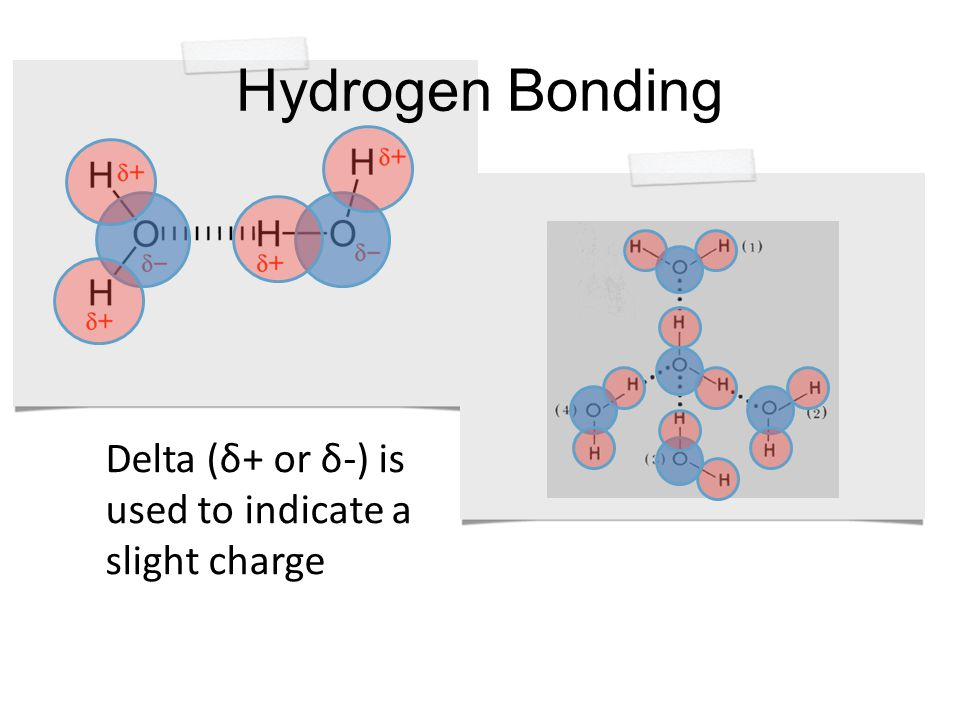Hydrogen Bonding Delta (δ+ or δ-) is used to indicate a slight charge