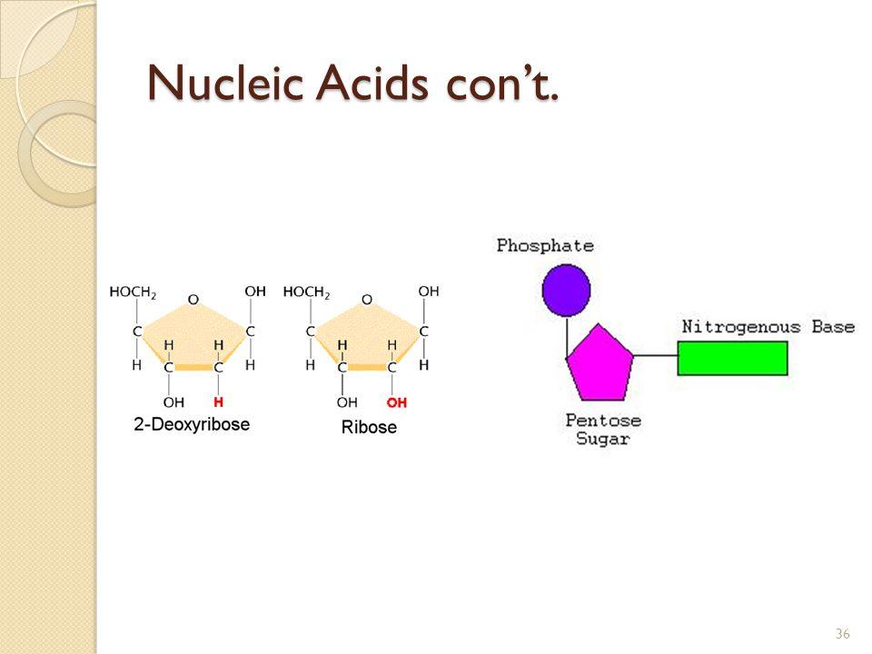 Nucleic Acids con't. 36