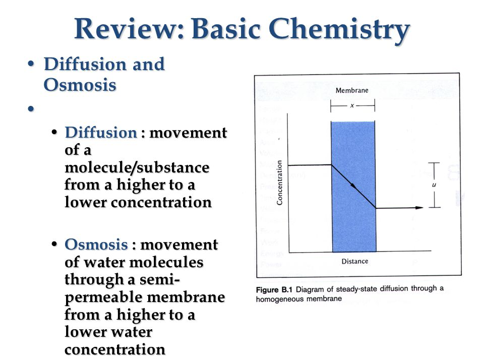 Review: Basic Chemistry Diffusion and Osmosis Diffusion and Osmosis Diffusion : movement of a molecule/substance from a higher to a lower concentration Diffusion : movement of a molecule/substance from a higher to a lower concentration Osmosis : movement of water molecules through a semi- permeable membrane from a higher to a lower water concentration Osmosis : movement of water molecules through a semi- permeable membrane from a higher to a lower water concentration