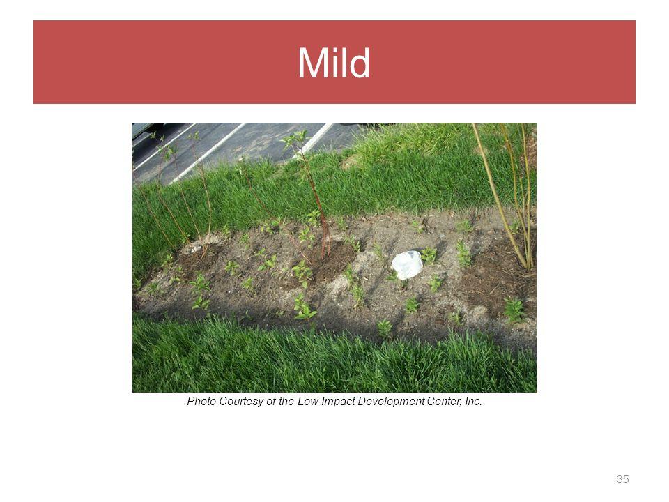 Mild 35 Photo Courtesy of the Low Impact Development Center, Inc.