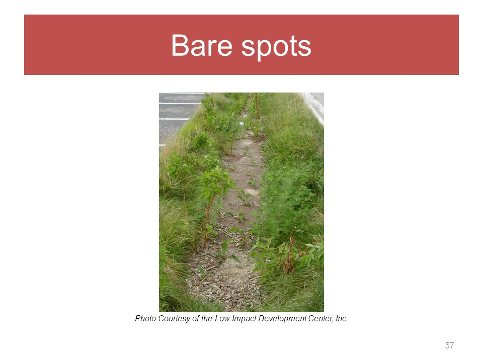 Bare spots 57 Photo Courtesy of the Low Impact Development Center, Inc.