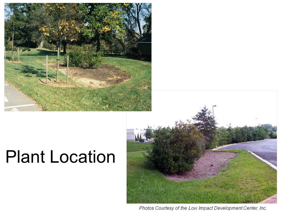 Plant Density Plant Location Photos Courtesy of the Low Impact Development Center, Inc.