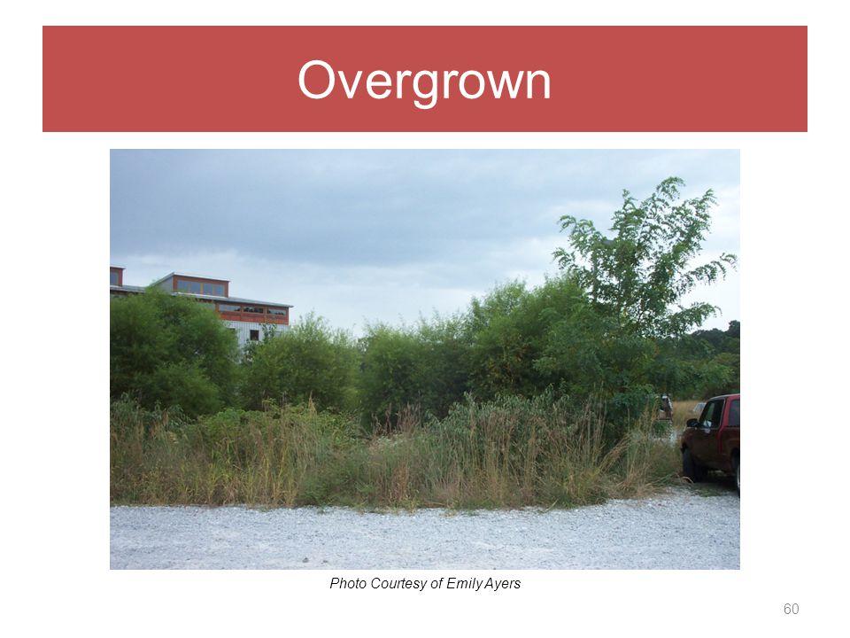 Overgrown 60 Photo Courtesy of Emily Ayers