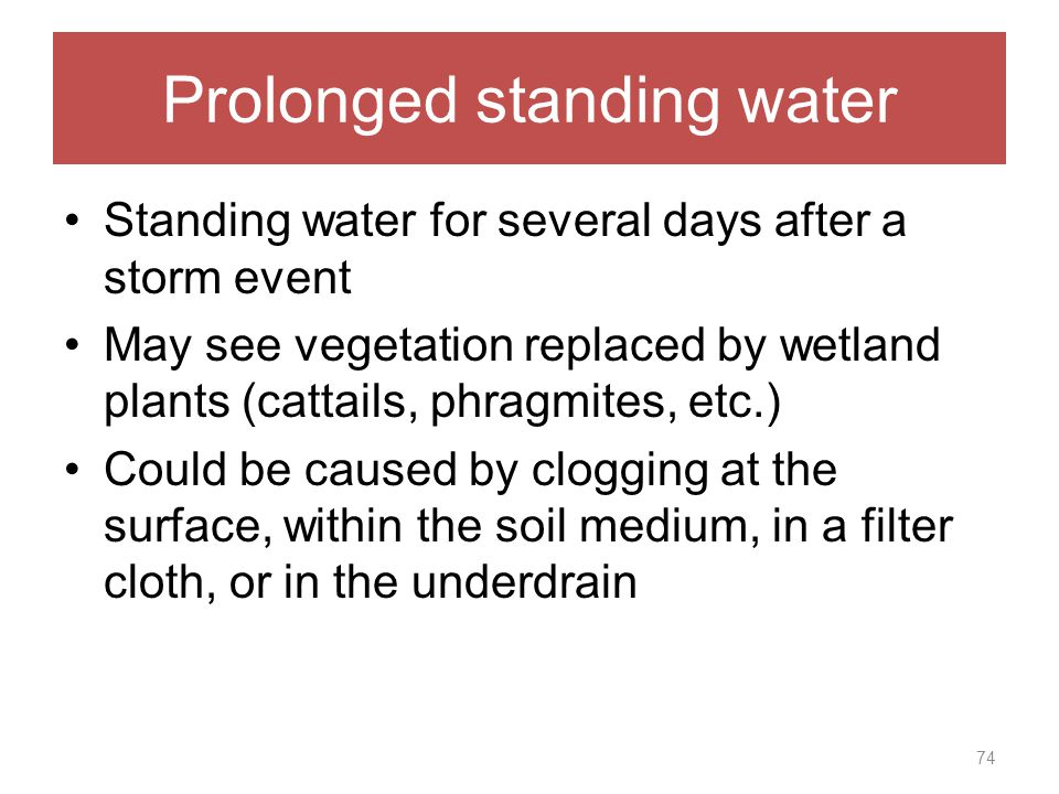 Prolonged standing water Standing water for several days after a storm event May see vegetation replaced by wetland plants (cattails, phragmites, etc.