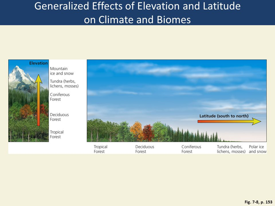 Fig. 7-8, p. 153 Generalized Effects of Elevation and Latitude on Climate and Biomes